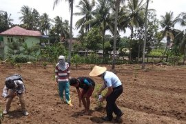 Lapas Rangkasbitung berdayakan Napi kelola usaha pertanian