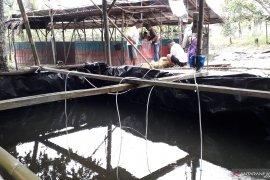 DKP Bangka Barat lanjutkan bantuan usaha budi daya ikan air tawar