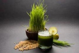 Manfaat minum jus rumput gandum setiap pagi