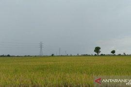 Dinas Pertanian Sulsel manfaatkan teknologi listrik PLN untuk atasi hama