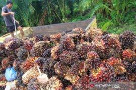 Indonesia ajak Malaysia lawan kampanye negatif kelapa sawit
