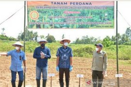 Pemkab Sinjai gandeng BPT Serealia Maros tingkatkan produksi jagung