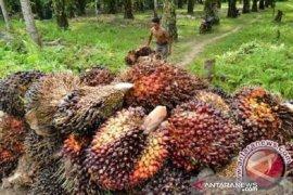 DJBC Riau catatkan penerimaan negara triwulan I capai Rp1,7 T