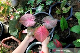 UKM pengekspor tanaman hias dapat dukungan KUR dari BNI