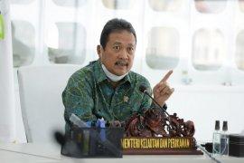 Hari ini, Menteri KKP dijadwalkan kunjungi tambak udang dipasena Tulang Bawang