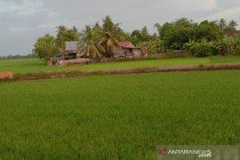 Pemprov Sulsel siapkan 1.000 sumur bor untuk tingkatkan produksi pertanian