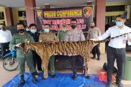 Polisi buru sindikat perdagangan harimau di Bengkulu
