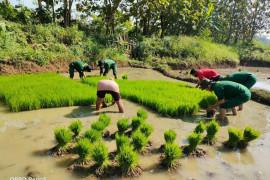 Praktikkan sistem Jarwo, mahasiswa Polbangtan YoMa lakukan pendampingan petani di Nogosari