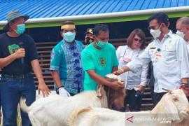 Mentan Kunjungi Peternakan Kambing Boer di Desa Apung, Bulungan
