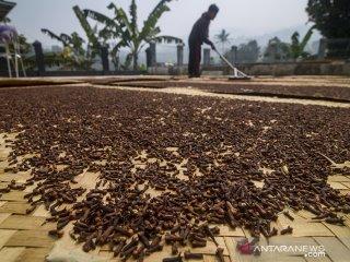 Petani mengeringkan biji cengkih yang telah dipanen di Desa Sindanglaya, Kabupaten Bandung,  Jawa Barat, Senin (24/6/2019). Petani menyatakan harga cengkih pada musim panen tahun ini turun sekitar 10 persen atau hanya dapat dijual Rp 70 ribu dibandingkan tahun lalu yang mencapai Rp 90 ribu per kilogram. ANTARA JABAR/Raisan Al Farisi/agr