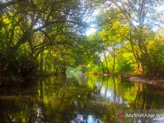Program normalisasi Sungai Karang Mumus (SKM) Samarinda, Kalimantan Timur saat ini terus dilaksanakan karena diyakini menjadi salah satu penyebab banjir yang melanda sebgian wilayah di ibukota Provinsi Kaltim, denga panjang sungai sekitar 47 kilometer, sebagian mengalami pendangkalan dan penyempitan oleh aktivitas manusia, namun ada beberapa lokasi aliran SKM yang menyisakan keindahan. Kawasan itu oleh pecinta SKM disebut potongan surga di Samarinda. (Antaranews Kaltim/ M Ghofar)
