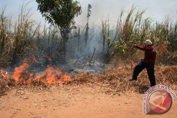 Lahan tebu satu hektar di Pamekasan terbakar