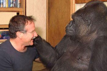 Koko, gorila pintar bahasa isyarat mati