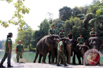 Gajah pun ikut meriahkan hari kemerdekaan