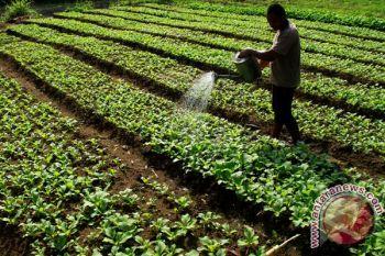 Wantimpres kumpulkan data pertanian Mamuju