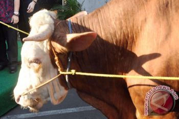 BBPKH beri pelatihan gangguan reproduksi pada ternak