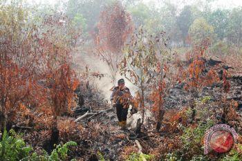 BRG riset aksi darurat penanggulangan kebakaran hutan-lahan