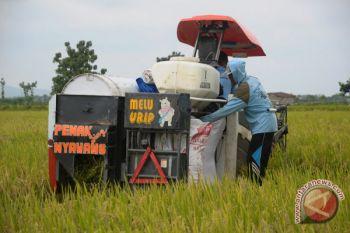 Kementan meminta Bulog segera menyerap gabah petani