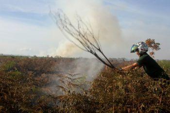 Dua hektare lahan gambut terbakar di Aceh Barat