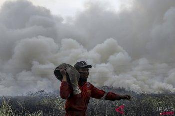Kebakaran Lahan DI Sungai Rambutan