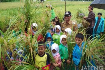 BOSS Gelar Lokakarya dan Panen Perdana Padi Organik