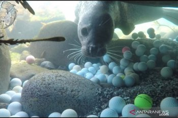Sampah Bola Golf Menumpuk di Dasar Samudra