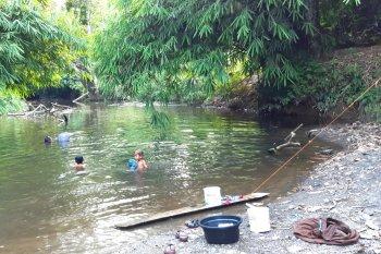 """Penyelamatan """"herbal ajaib"""" dari hutan Kalimantan"""