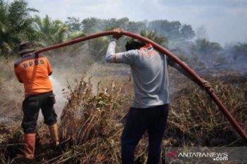 Kebakaran lahan terus  terjadi di Penajam Paser Utara