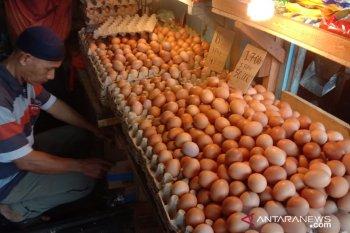 Harga telur ayam ras di pasar Ambon bervariasi