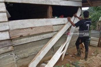 Gangguan gajah di Nagan Raya Aceh masih meneror