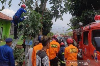 Saat memotong dahan kayu, Ohim tewas tersengat listrik