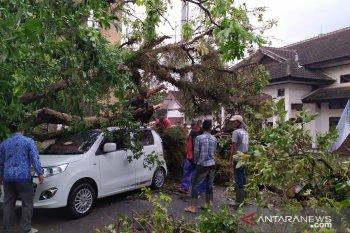 ibu rumah tangga berhasil dievakuasi dari dalam mobil tertimpa pohon