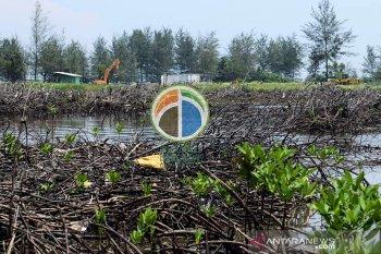 Penimbunan bakau untuk PLTU hilangkan pendapatan nelayan Bengkulu