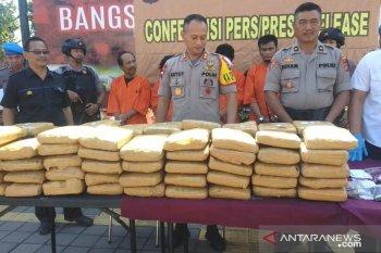 Polres Jembrana bongkar pengiriman 100 Kg ganja dari Jawa