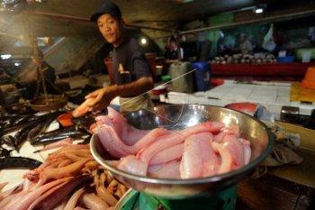Harga daging ikan gabus capai Rp130 ribu per kilogram