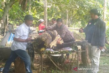 Gula Tebu Berpotensi Jadi Unggulan Desa Mahulu