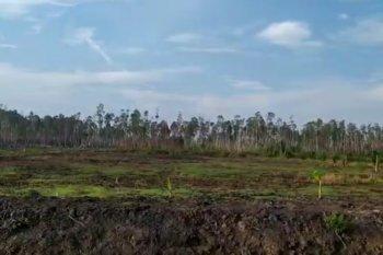 Paser siapkan 200 hektar lahan pengembangan tanaman pisang