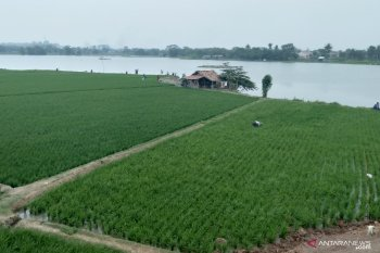 Realisasi tanam padi  di lahan sawah Karawang capai 138.533 hektare