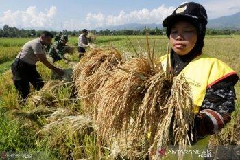 Satu penyuluh pertanian tangani tujuh desa di Kabupaten Aceh Utara