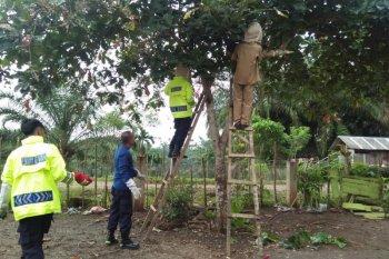 Ulat bulu serbu sekolah di Lubukbasung, murid terpaksa dipulangkan