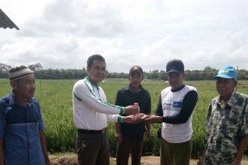 Mukomuko bantu kurangi serangan hama perusak padi