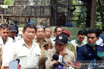 Pusat Suaka Orangutan Arsari didirikan di Kabupaten Penajam