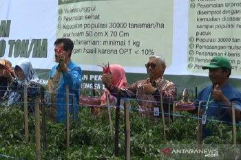 Kementan luncurkan program proliga untuk dongkrak produksi cabai nasional