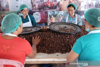 Kabupaten Jembrana miliki desa devisa dari komoditas kakao