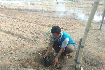 Petani Lebak budidayakan buah-buahan dukung program konservasi lahan