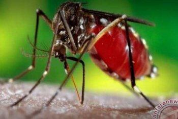 Waspada DBD jika terdapat gejala khas saat demam pada anak
