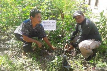 Mangrove Tanjungpunai jadi destinasi wisata baru andalan Bangka Barat