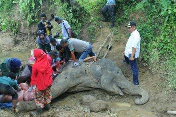 Neneng , gajah betina di Kebun Binatang Medan mati
