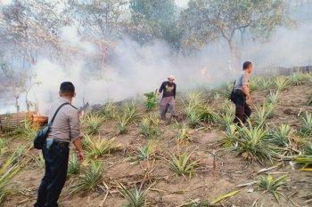 Puluhan hektare lahan hutan di Ambon terbakar