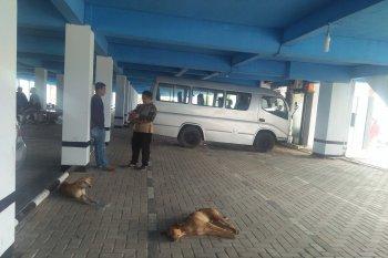Mukomuko tunda eliminasi ratusan anjing liar
